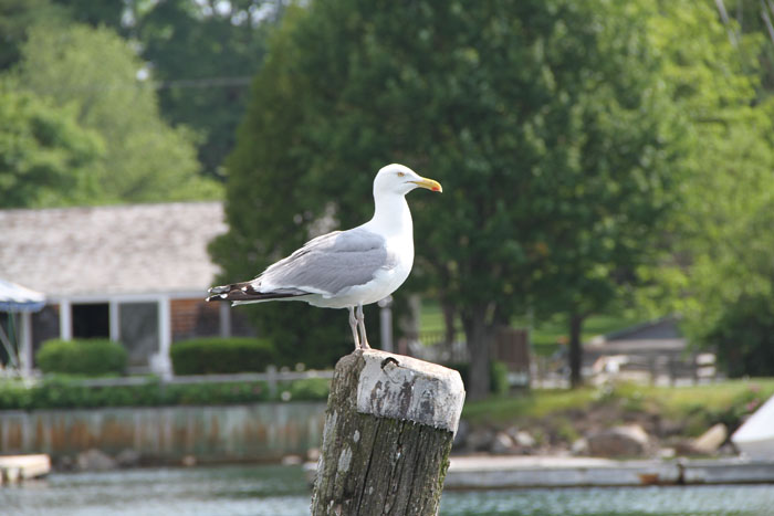2014 Images l 2013 Images l 2011 Images Around Kennebunkport and
