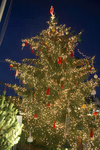 christmas-tree-close