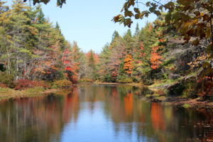 fall-foliage-14-maine2