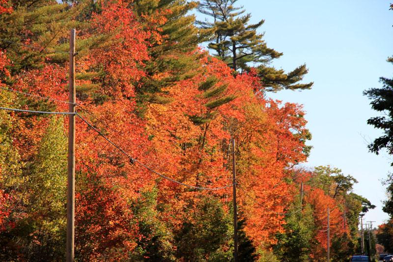 fall-foliage-14-me