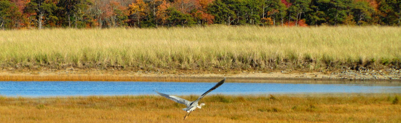 fall-kennebunk-great-heron