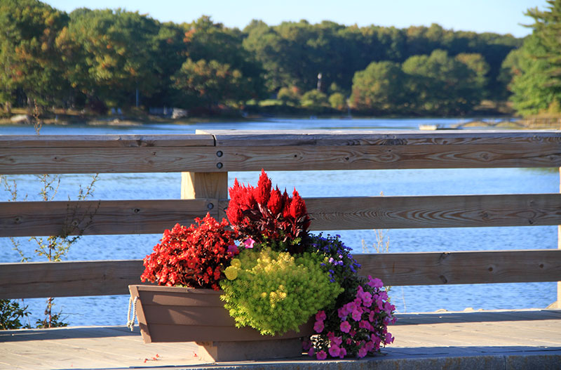 kennebunkport-fall-flowers