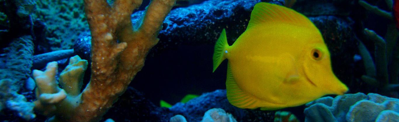 spa-breakwater-fish