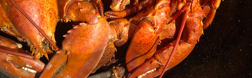 lobstas